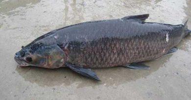 Ngủ mơ thấy cá đen đánh ngay con số đề nào ăn chắc