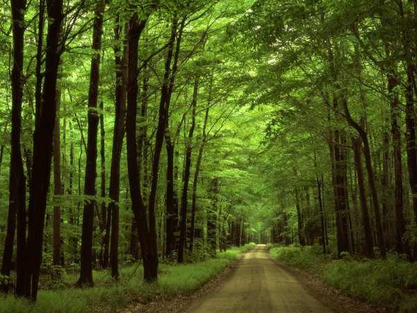 Mơ thấy rừng rậm là điềm báo điều gì?